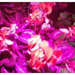 Đèn trồng cây 500W