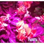 Đèn trồng cây cảnh trong nhà
